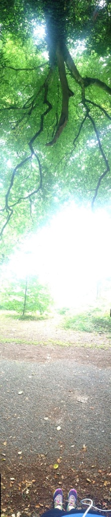Yes i took a vertical Panorama on the phone.. lol i kinda like it.. toes to trees!